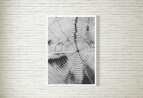 Poster/Bild | Baumstamm