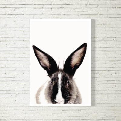 Poster/Bild | Hase