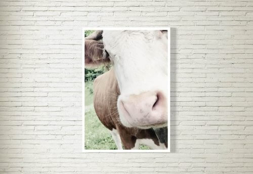 Poster/Bild | Kuh