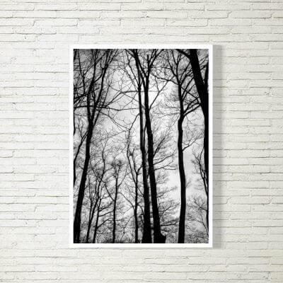 Poster/Bild | Wald