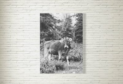 kartlerei poster shop bayrische poster kuh berge 400x275 - Poster & Bilder